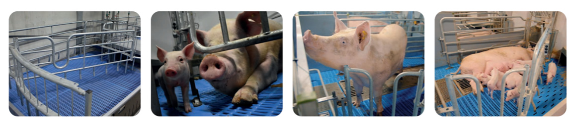 豚用NOOEN社製床材フローリング