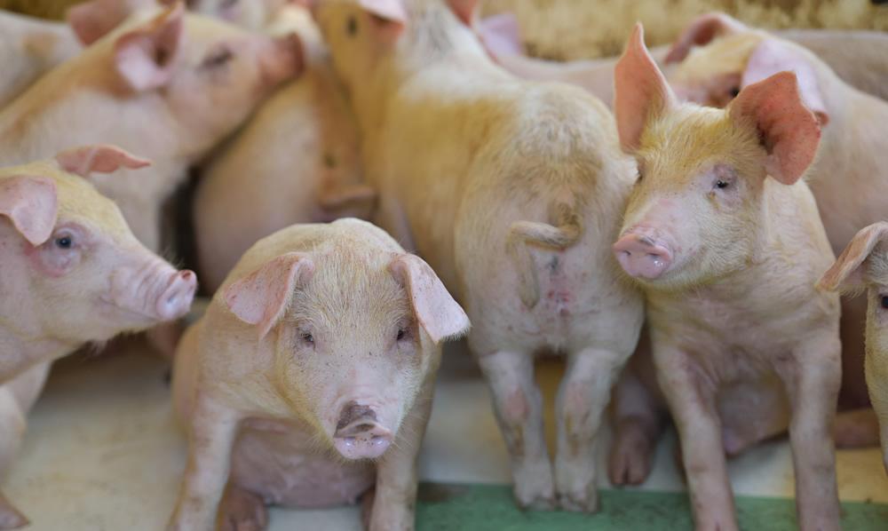 養豚業商社