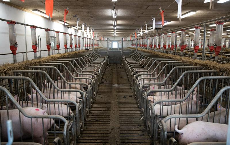 養豚場衛生管理システム