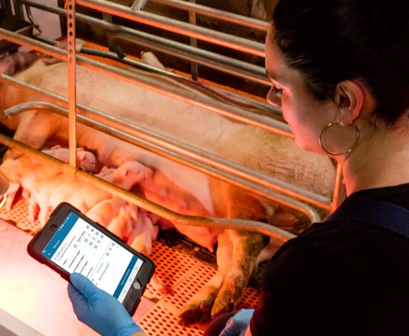豚管理システムスマホ対応