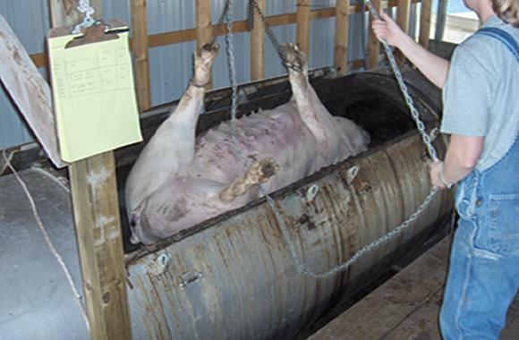たい肥化できる動物死骸処理へい獣処理機