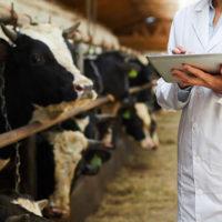 超音波画像診断器(牛など大動物~豚など中動物用)一覧