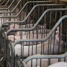 豚舎設備システム