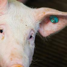 豚管理システム
